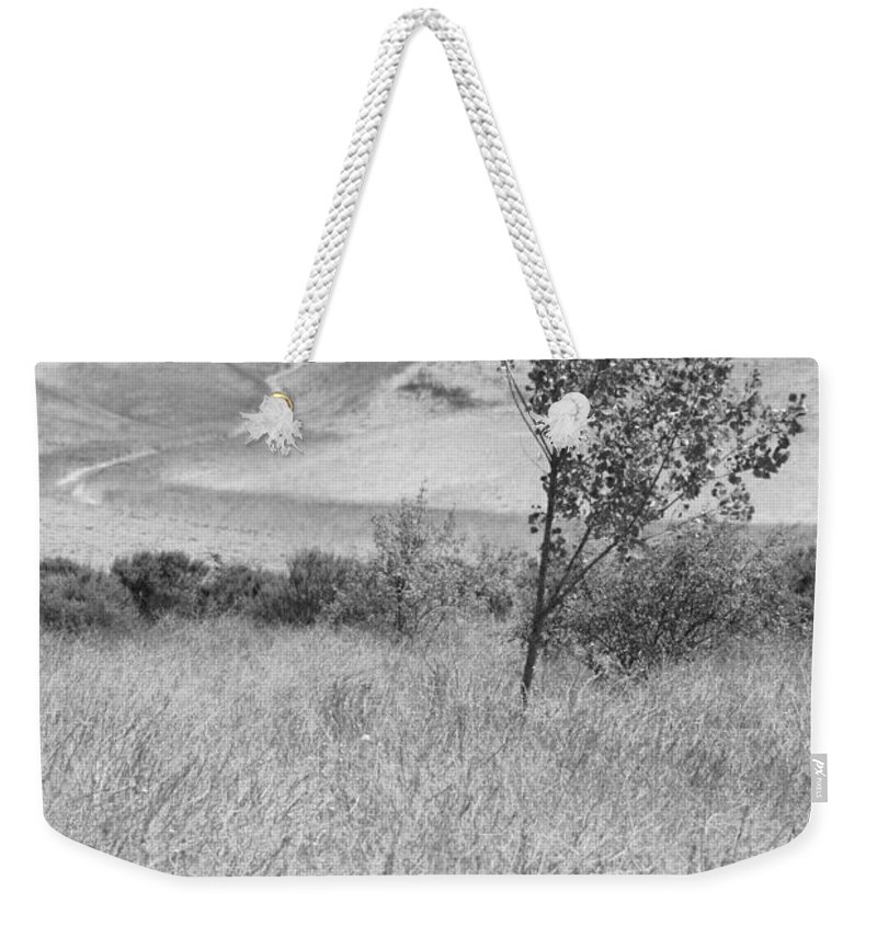 Los Alamos Weekender Tote Bag featuring the photograph Through The Tall Grasses by Kathleen Grace