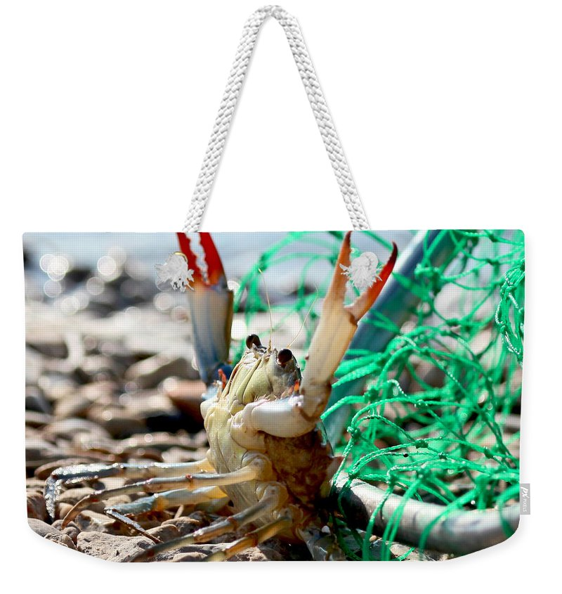 Louisiana Crab Weekender Tote Bag featuring the photograph Crab Throw Me Something Mister by Luana K Perez
