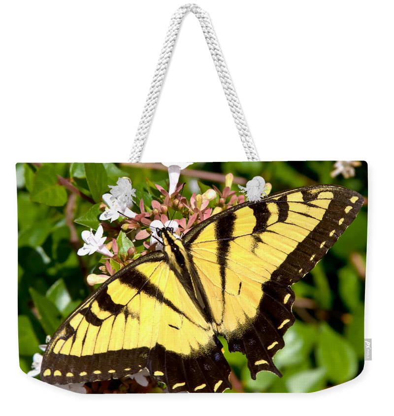 Butterfly Weekender Tote Bag featuring the photograph Tiger Swallowtail by Lynne Jenkins