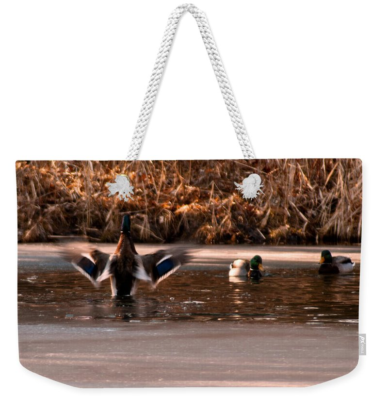 Usa Weekender Tote Bag featuring the photograph Time For Me To Fly by LeeAnn McLaneGoetz McLaneGoetzStudioLLCcom