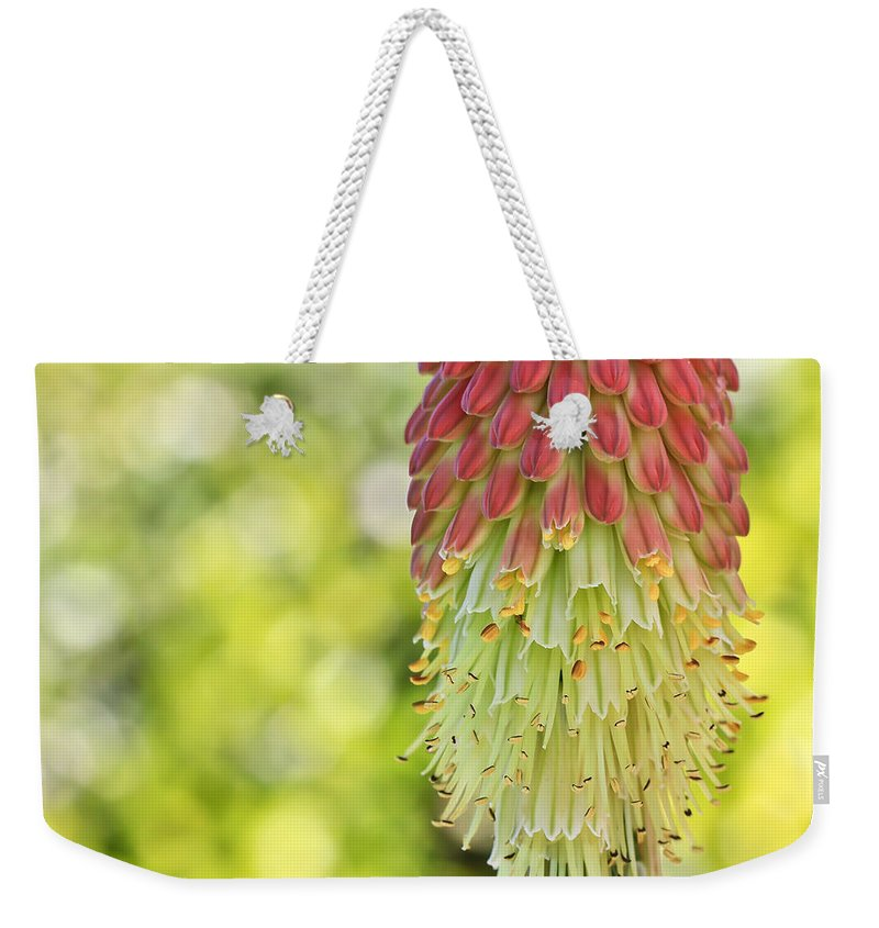 Plant Weekender Tote Bag featuring the photograph Torch by Heidi Smith