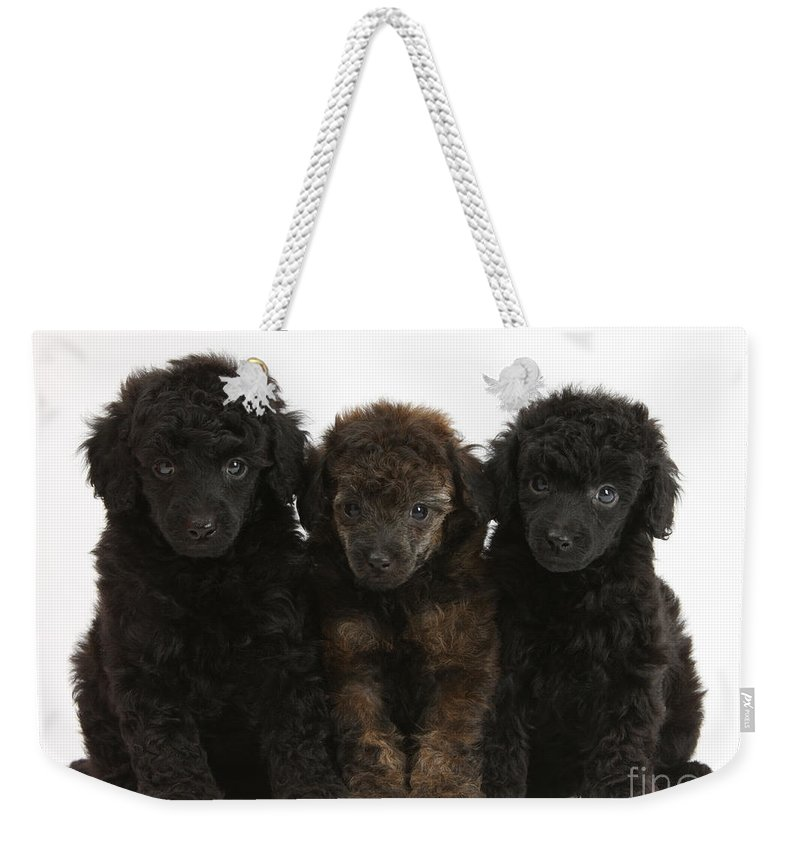 Animal Weekender Tote Bag featuring the photograph Toy Poodle Pups by Mark Taylor