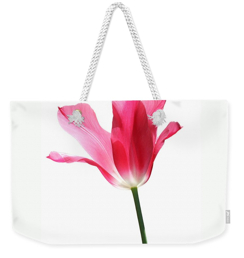 Tulip Weekender Tote Bag featuring the photograph Translucent Pink Tulip Flower by Jennie Marie Schell