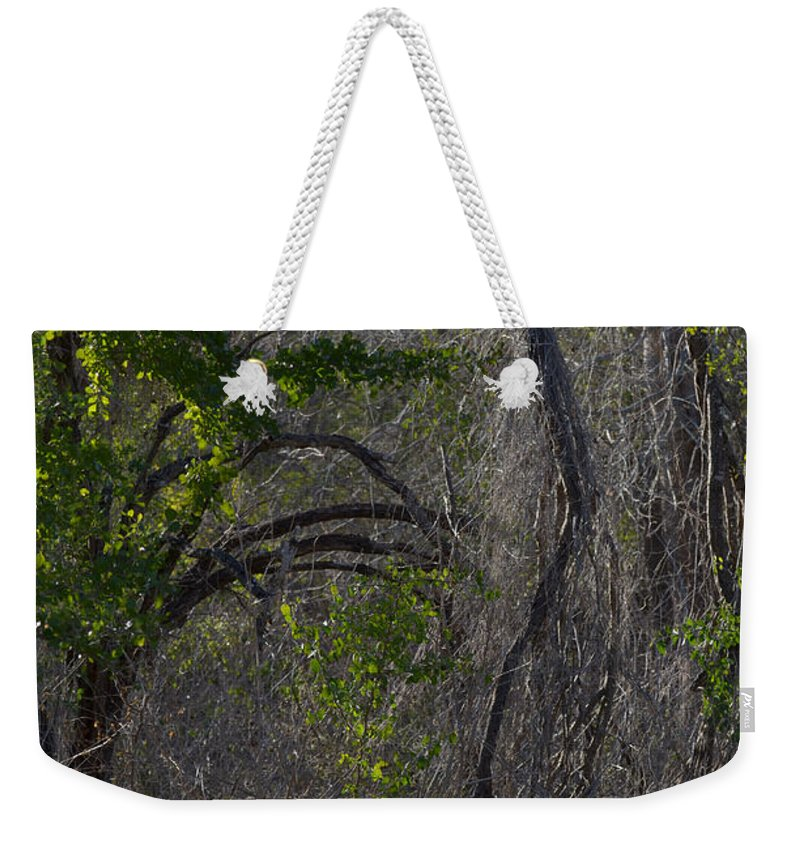 Tree Weekender Tote Bag featuring the photograph Tree Abstract by Donna Brown