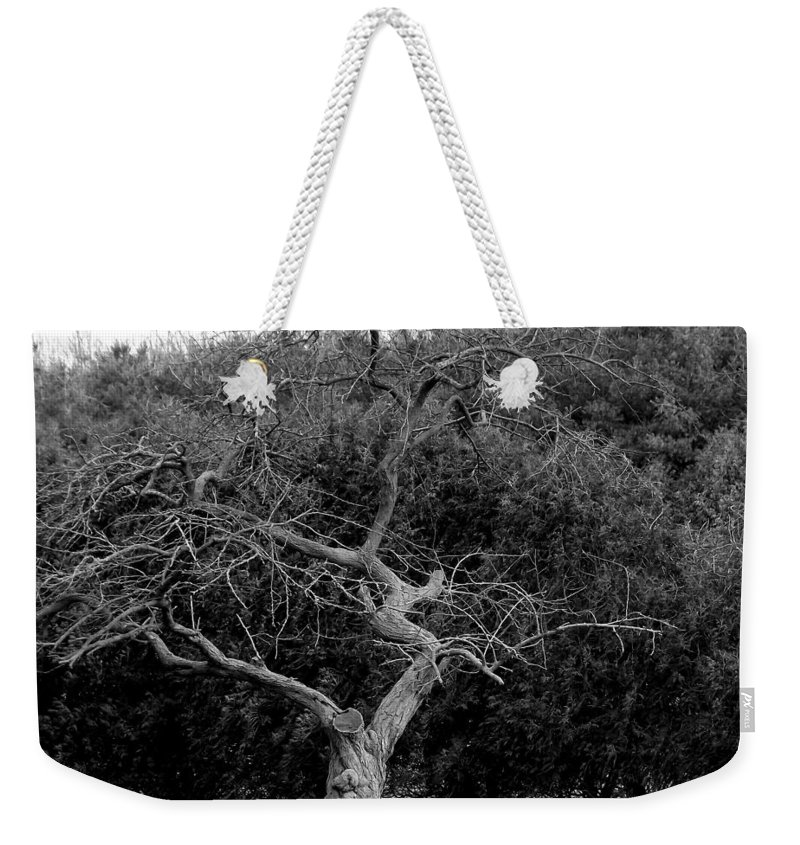 Dance Weekender Tote Bag featuring the photograph Tree Dancer by Shelley Blair