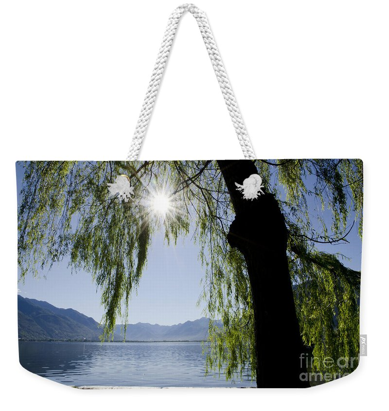 Tree Weekender Tote Bag featuring the photograph Tree In Backlight by Mats Silvan
