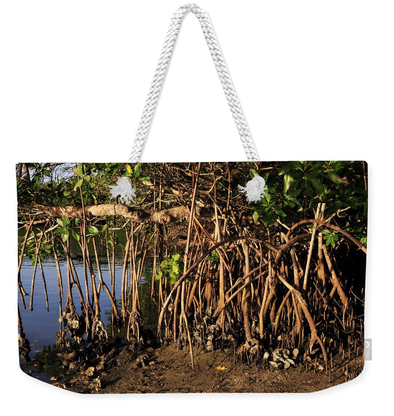 Fine Art Photography Weekender Tote Bag featuring the photograph Tropical Mangroves by David Lee Thompson