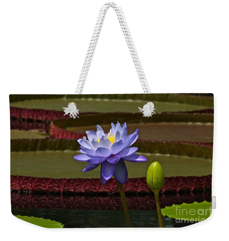 Tropical Water Lilies. Lavender Waterlily Weekender Tote Bag featuring the photograph Tropical Water Lilies by Byron Varvarigos