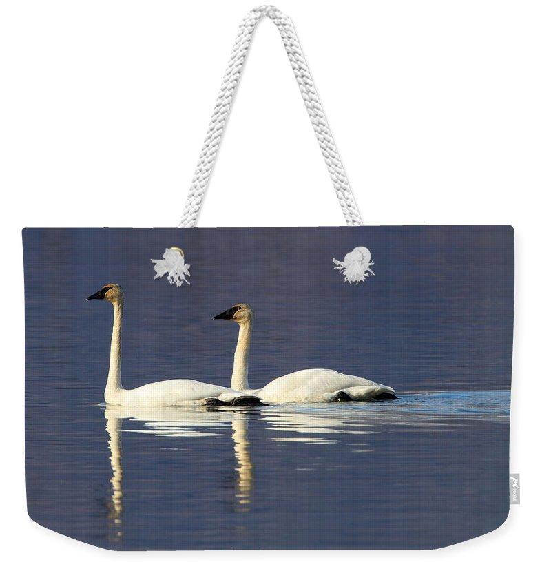 Doug Lloyd Weekender Tote Bag featuring the photograph Trumpeter Swan Pair by Doug Lloyd