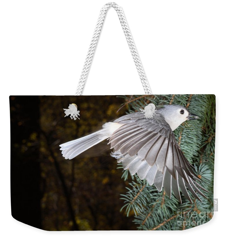 Tufted Titmouse Weekender Tote Bag featuring the photograph Tufted Titmouse In Flight by Ted Kinsman