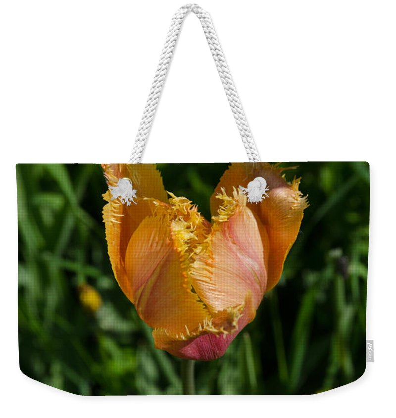 Backlit Weekender Tote Bag featuring the photograph Tulip Opening by Michael Goyberg