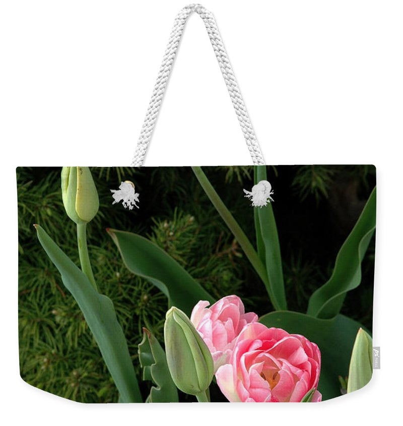 Tulips Weekender Tote Bag featuring the photograph Tulips And Evergreen by Mike Nellums