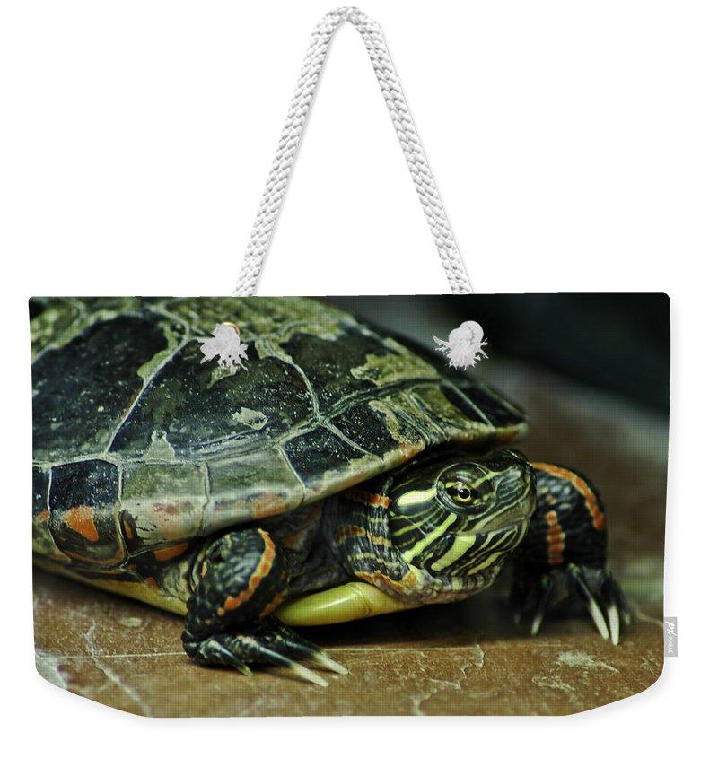 Usa Weekender Tote Bag featuring the photograph Turtle Neck by LeeAnn McLaneGoetz McLaneGoetzStudioLLCcom