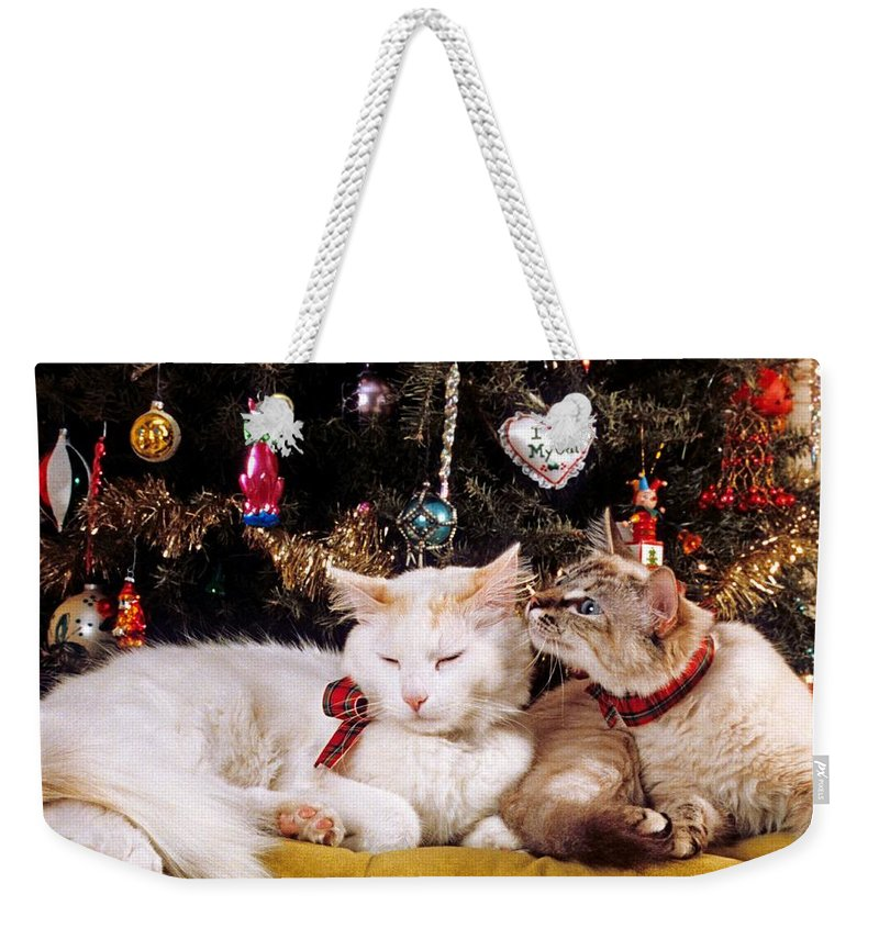 Domestic House Cat Weekender Tote Bag featuring the photograph Two Cats At Christmas by Larry Allan