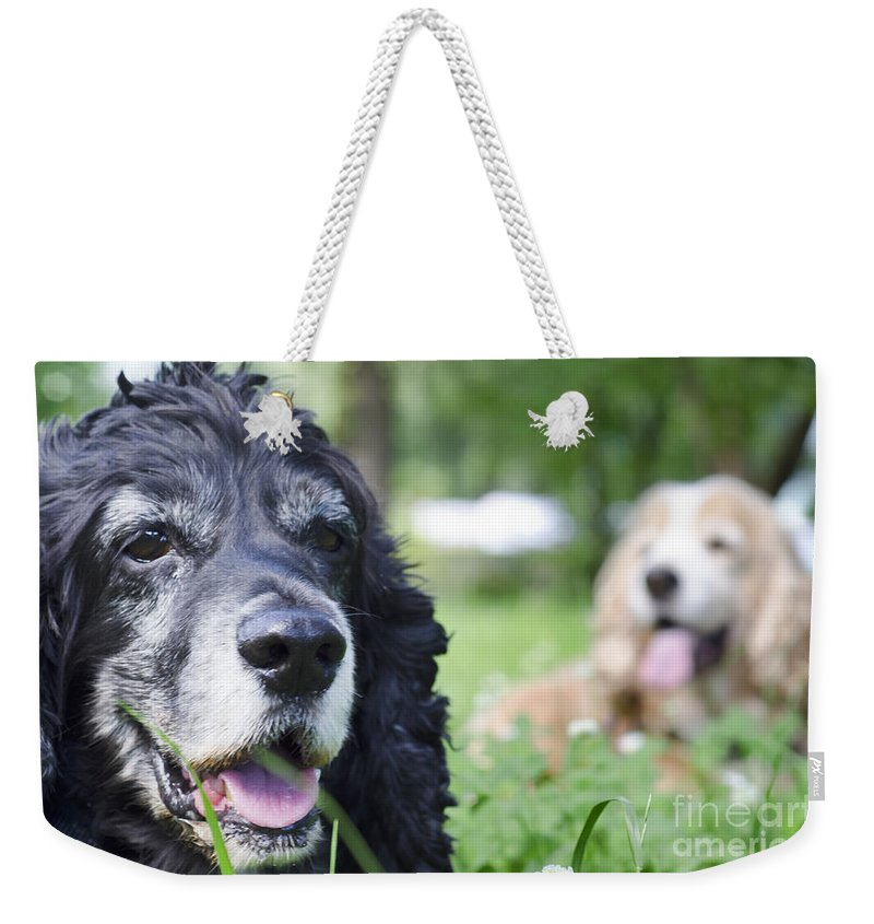Dog Weekender Tote Bag featuring the photograph Two Cocker Spaniel Dogs by Mats Silvan