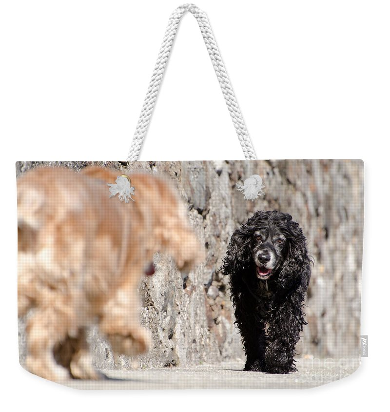 Dog Weekender Tote Bag featuring the photograph Two Dogs by Mats Silvan