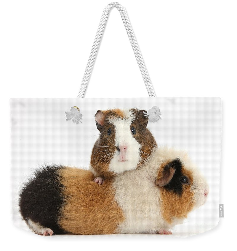 Nature Weekender Tote Bag featuring the photograph Two Guinea Pigs by Mark Taylor