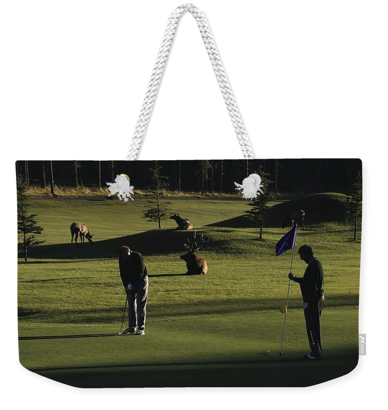 North America Weekender Tote Bag featuring the photograph Two People Play Golf While Elk Graze by Raymond Gehman