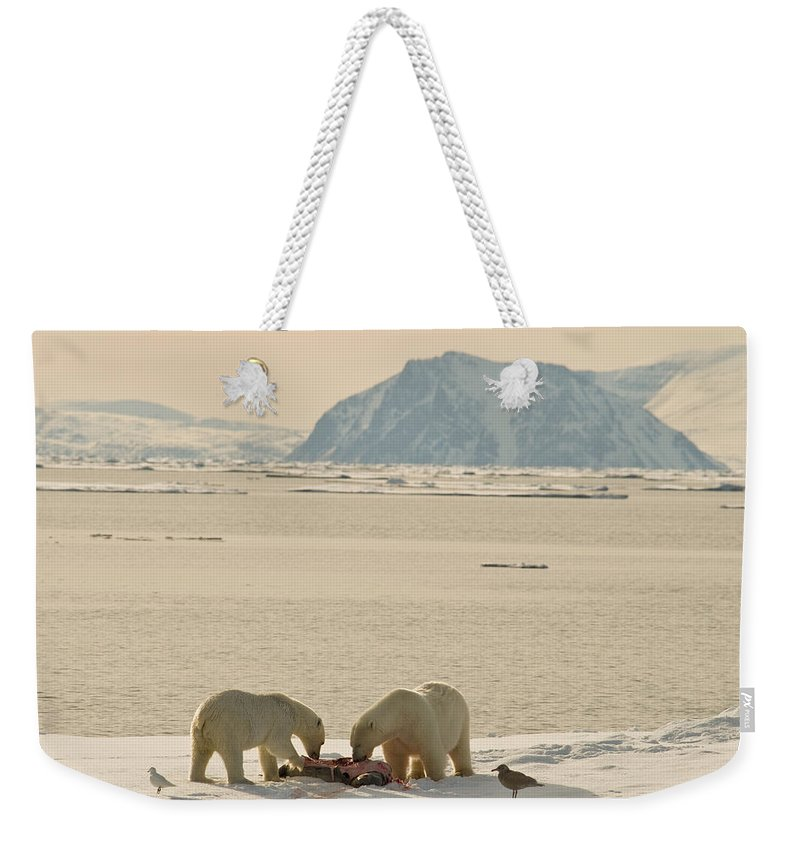 Svalbard Weekender Tote Bag featuring the photograph Two Polar Bears Eat A Carcass As Sea by Norbert Rosing