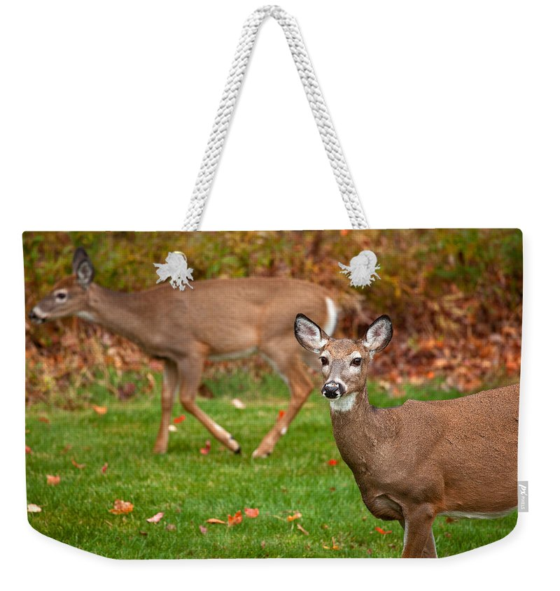 Deer Weekender Tote Bag featuring the photograph Two Visitors by Karol Livote
