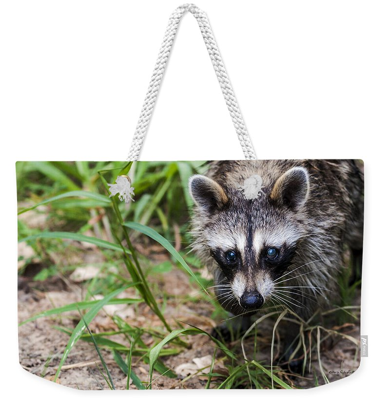 Heron Haven Weekender Tote Bag featuring the photograph Unaware Bandit by Edward Peterson