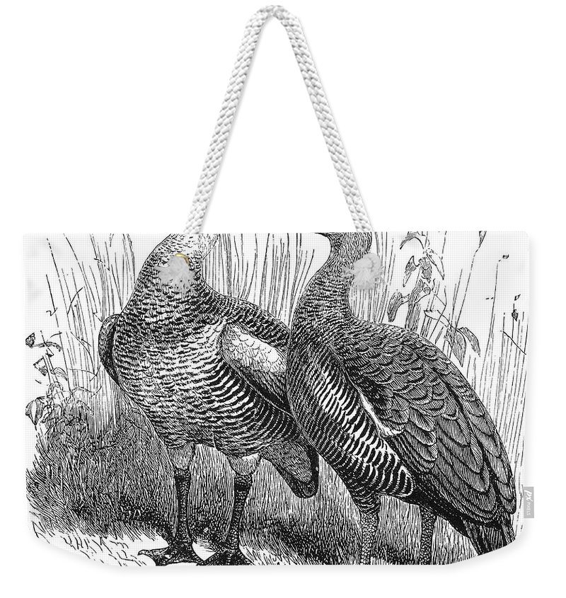 19th Century Weekender Tote Bag featuring the photograph Upland Geese by Granger