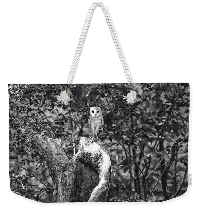 Barn-owl Weekender Tote Bag featuring the photograph Vantage Point V5 by Douglas Barnard