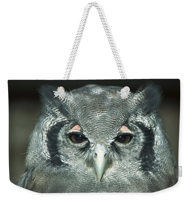 Mp Weekender Tote Bag featuring the photograph Verreauxs Eagle-owl Bubo Lacteus by Konrad Wothe