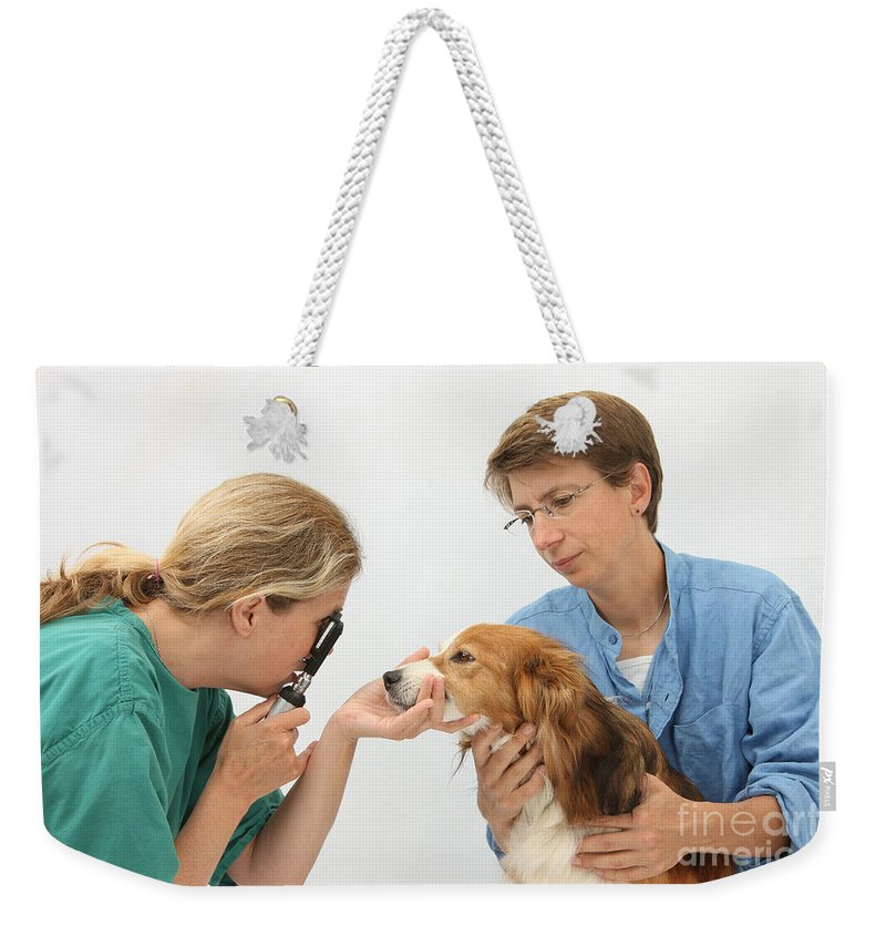 Fauna Weekender Tote Bag featuring the photograph Vet Examining A Dogs Eye With An by Mark Taylor