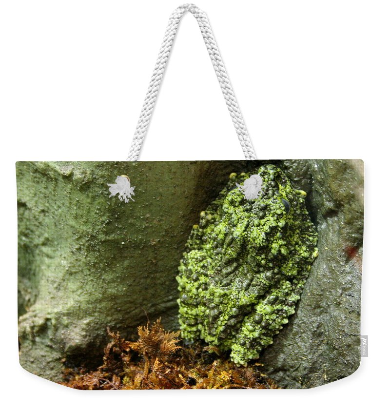 Tonkin Bug-eyed Frog Weekender Tote Bag featuring the photograph Vietnamese Mossy Frog by Laurel Talabere
