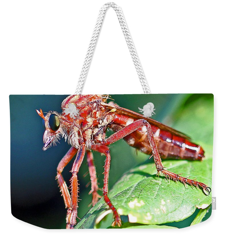 Robber Fly Weekender Tote Bag featuring the photograph Waiting To Attack II by Rebecca Morgan