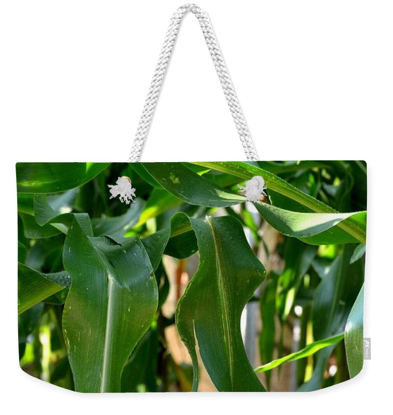 Walking Weekender Tote Bag featuring the photograph Walking Through The Cornfields by Maria Urso