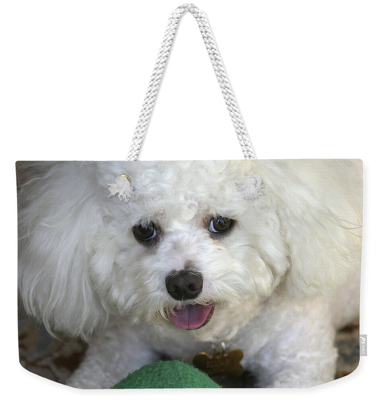 Dog Weekender Tote Bag featuring the photograph Wanna Play Ball? by Diana Haronis