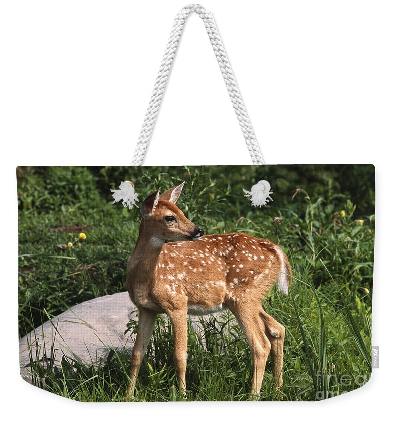 Sandra Bronstein Weekender Tote Bag featuring the photograph Watching For Mom by Sandra Bronstein