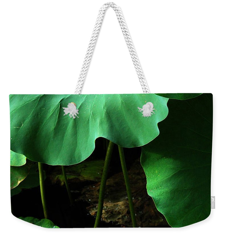 Water Weekender Tote Bag featuring the photograph Water Lilies Of Green by Mike Nellums