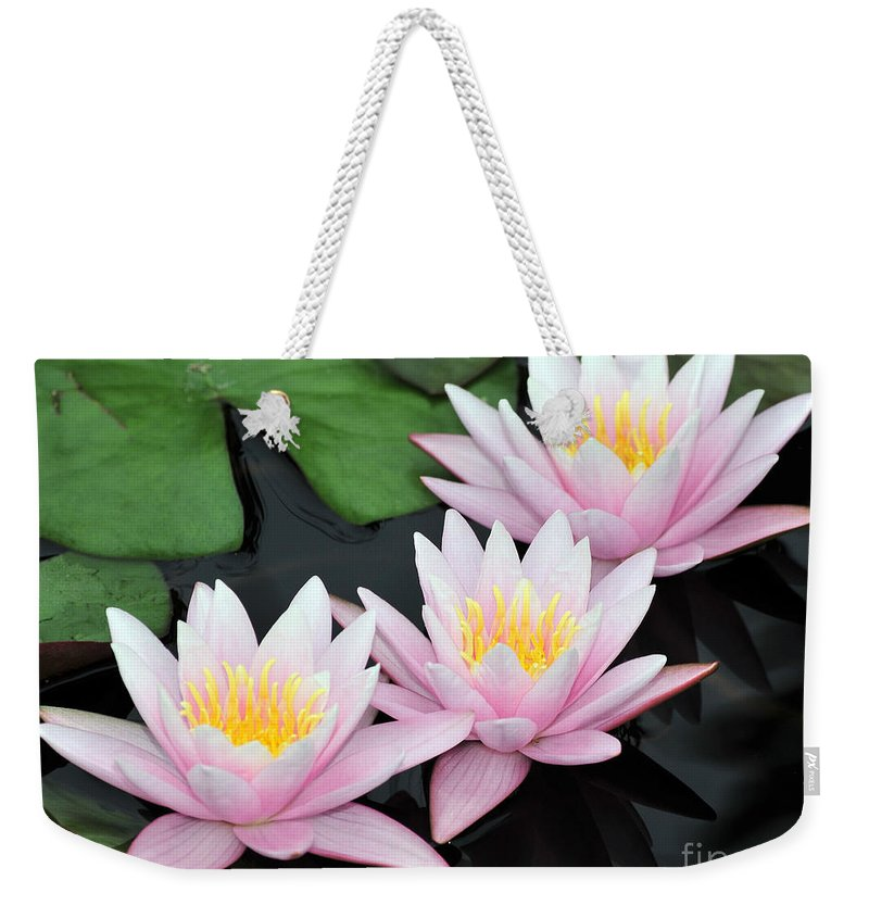 Water Lilies Weekender Tote Bag featuring the photograph water lily 88 Sunny Pink Water Lily with Reflection by Terri Winkler