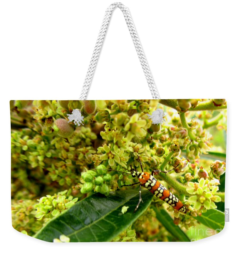 Tree Weekender Tote Bag featuring the photograph Webworm Moth by Donna Brown