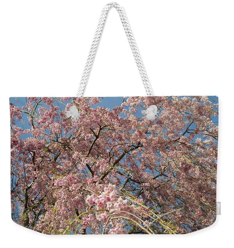 Weeping Cherry Tree Weekender Tote Bag featuring the photograph Weeping Cherry Tree In Bloom by Todd Gipstein