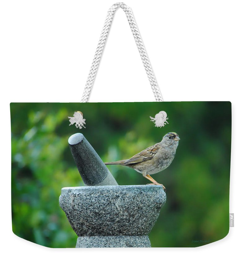 Sparrow Weekender Tote Bag featuring the photograph Well Grounded by Donna Blackhall