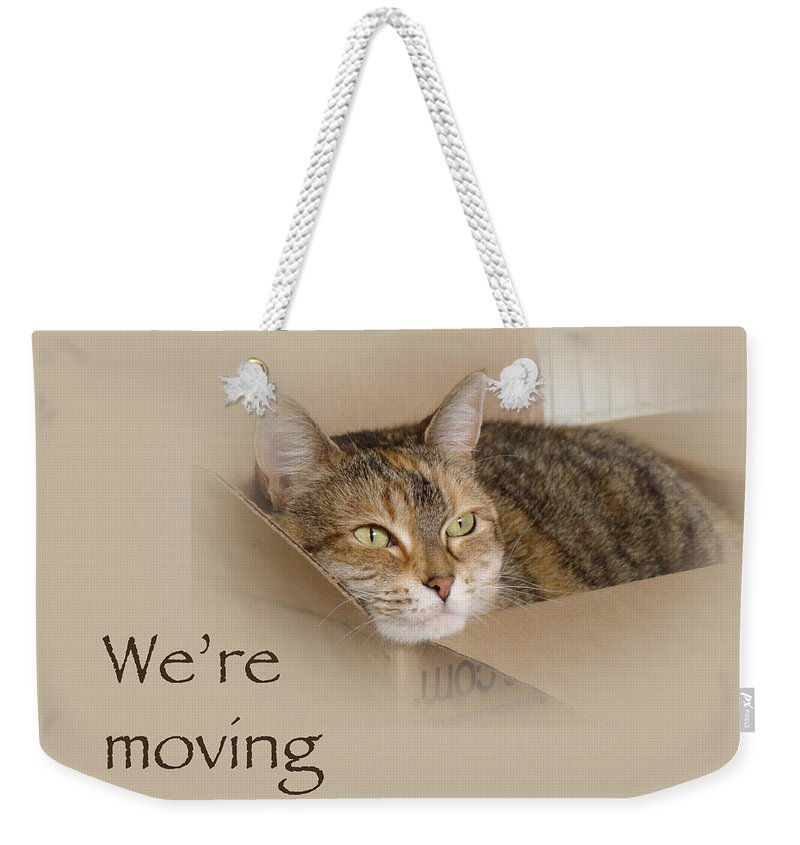 Moving Weekender Tote Bag featuring the photograph We're Moving Notification Greeting Card - Lily The Cat by Mother Nature