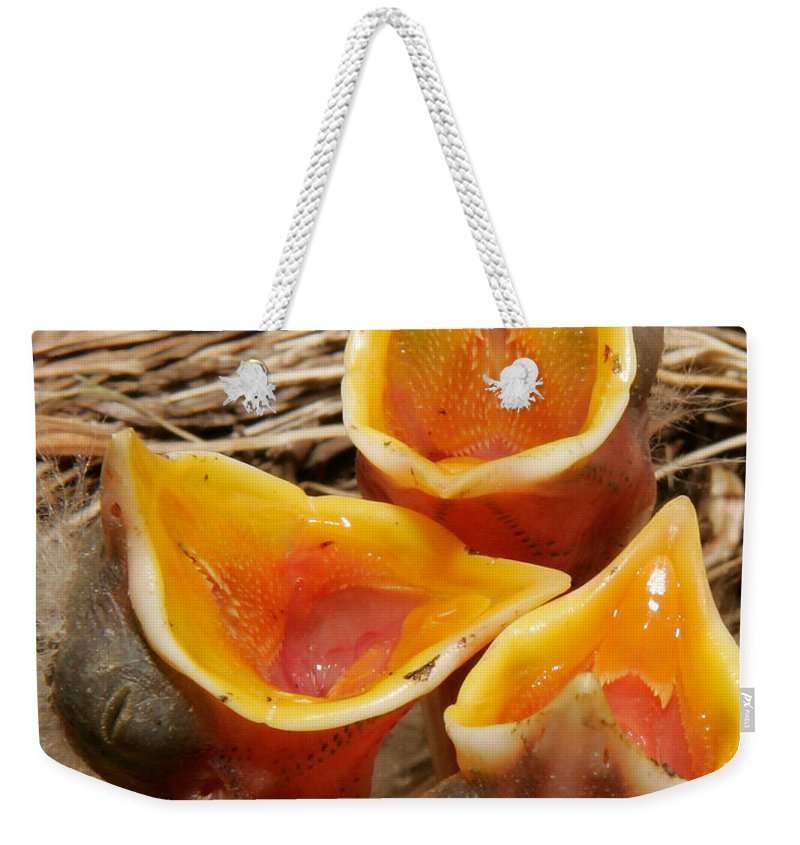 Birds Weekender Tote Bag featuring the photograph We've Only Just Begun by Susan Candelario