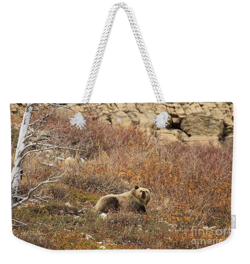 Grizzly Bear Weekender Tote Bag featuring the photograph What A Beautiful Day by Adam Jewell