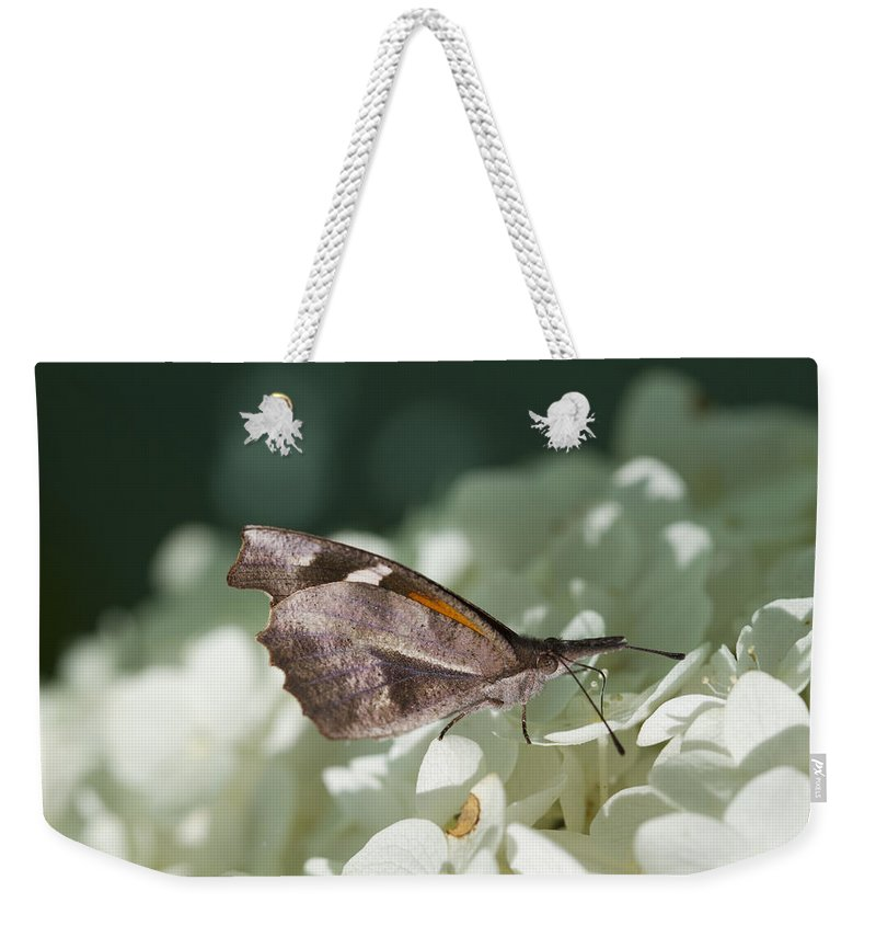 Libytheana Carinenta Weekender Tote Bag featuring the photograph What A Schnoz On That American Snout Butterfly by Kathy Clark