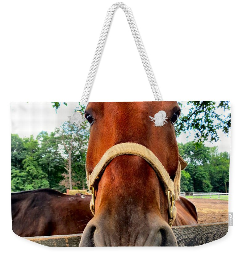 Horse Weekender Tote Bag featuring the photograph What Do I Smell by Art Dingo