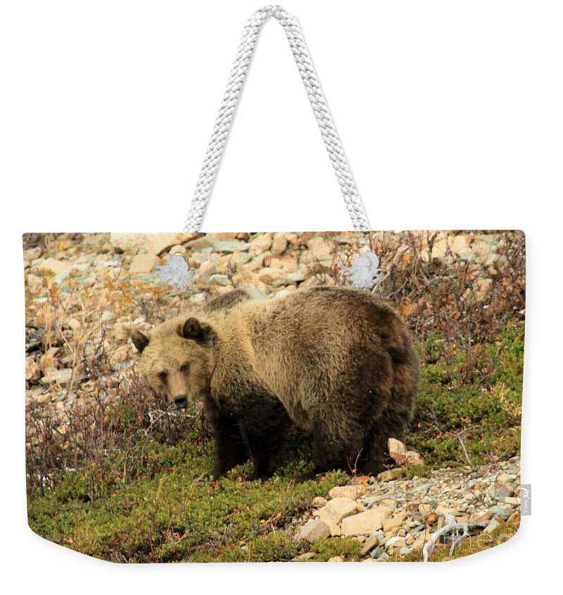 Grizzly Bear Weekender Tote Bag featuring the photograph What's That I Smell? by Adam Jewell