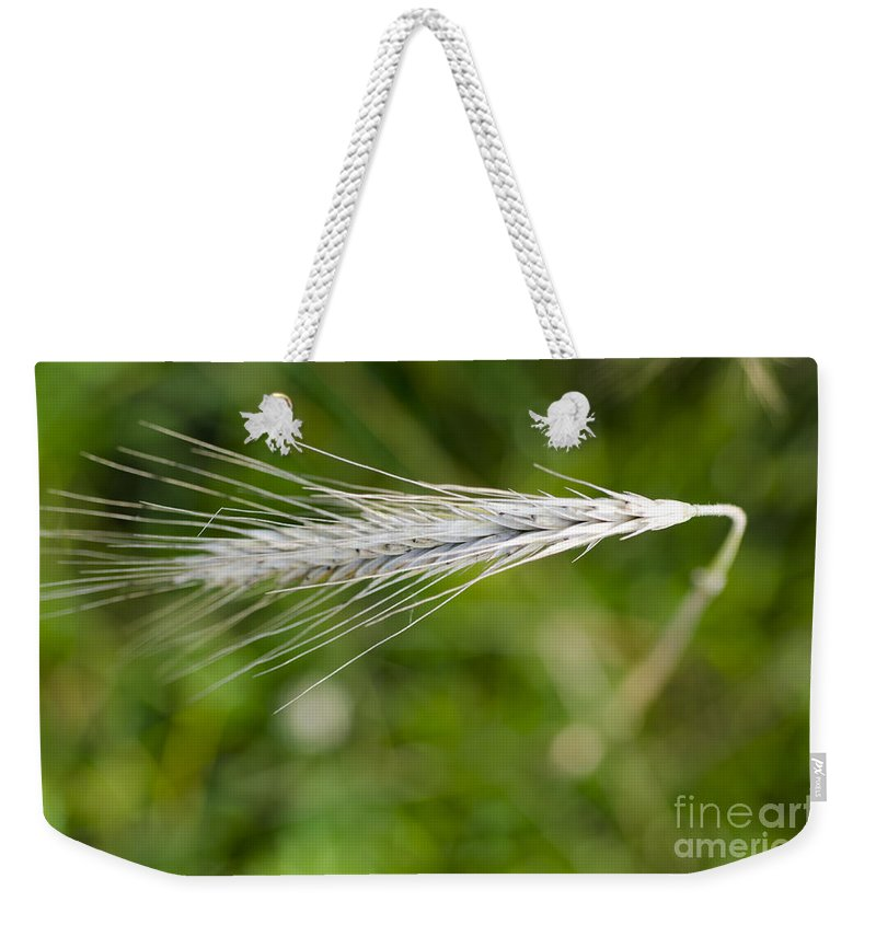 White Weekender Tote Bag featuring the photograph Wheat by Mats Silvan