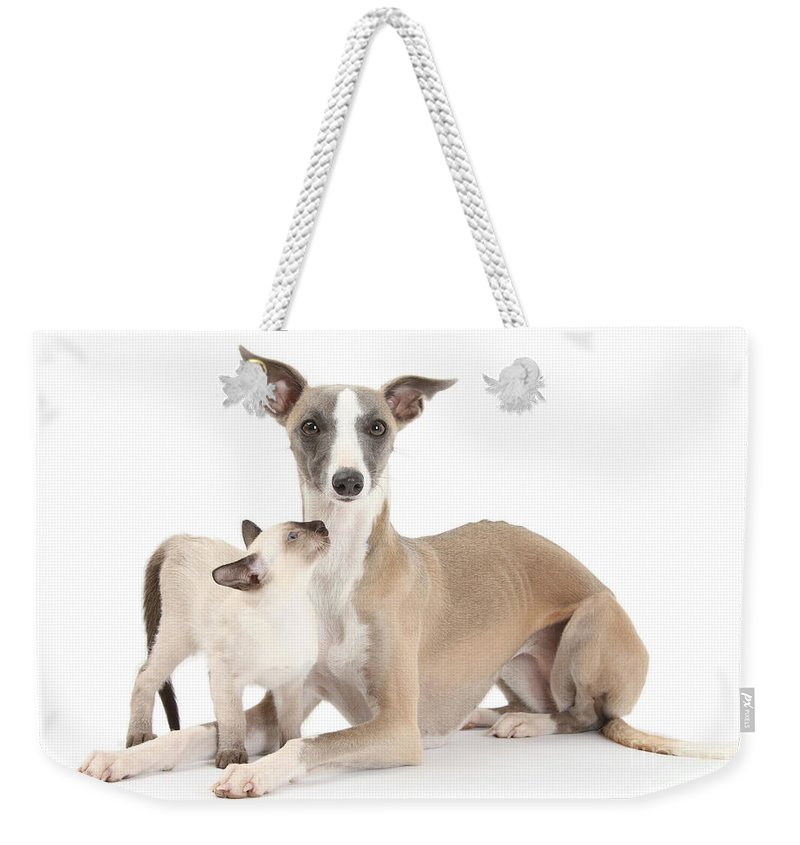 Animal Weekender Tote Bag featuring the photograph Whippet And Siamese Kitten by Mark Taylor