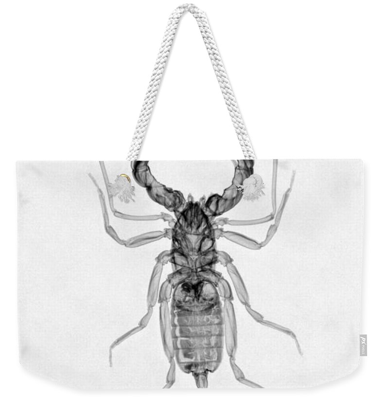 X-ray Weekender Tote Bag featuring the photograph Whipscorpion X-ray by Ted Kinsman