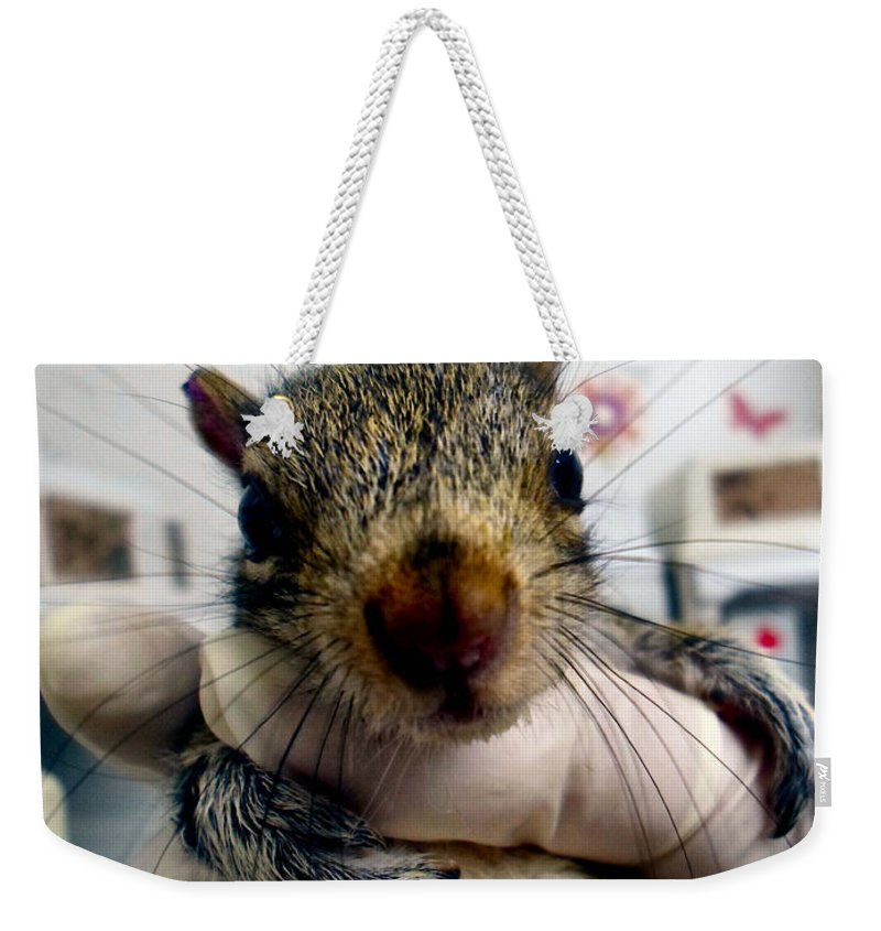 Squirrel Weekender Tote Bag featuring the photograph Whiskers The Name by Art Dingo