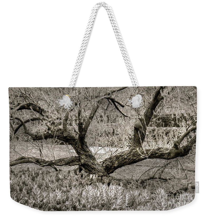 Tree Weekender Tote Bag featuring the photograph Whisper by Debbi Granruth